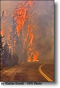 Crown fire, West Thumb, Yellowstone National Park
