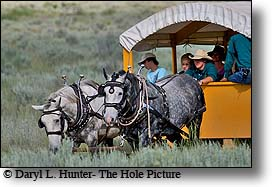 Yellowstone wagon rides