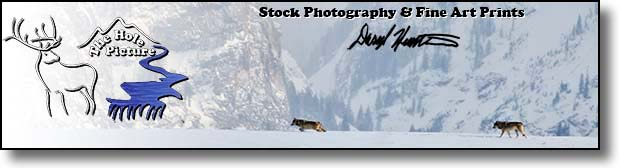 Photography of Daryl L. Hunter, landscape, wildlife, travel, lifestyle
