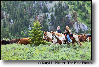 Cattle drive in Alpine Wyomin is usually a family affair