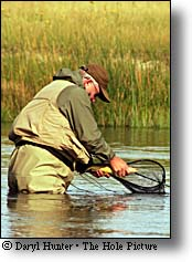Fly-fisherman preparing to release large trout in the Madison River