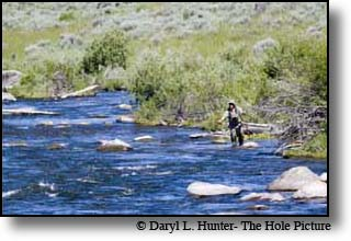 Fly-fisherman casting for trout in on the Madison River