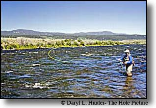 Madison River Fly-fisherman